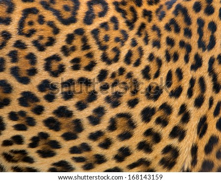 Leopard fur background #168143159