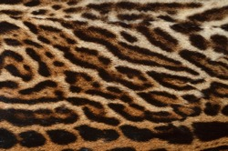 leopard fur background texture