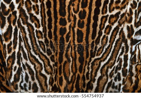 leopard fur background texture