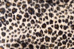 Leopard fur texture background.