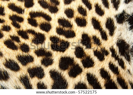 Leopard fur. Texture or background