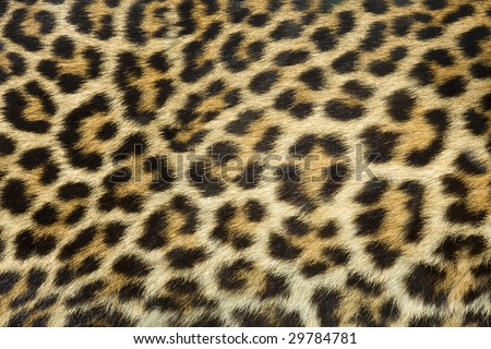 leopard fur texture (real)