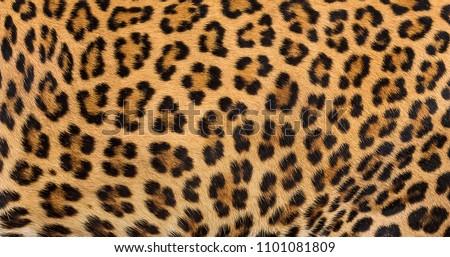 Leopard fur texture (real fur) #1101081809