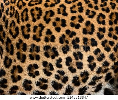 Leopard fur texture (real fur) #1148818847