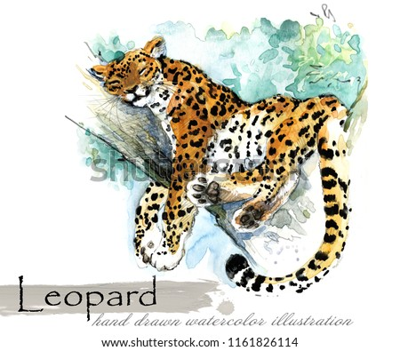 Leopard hand drawn watercolor illustration