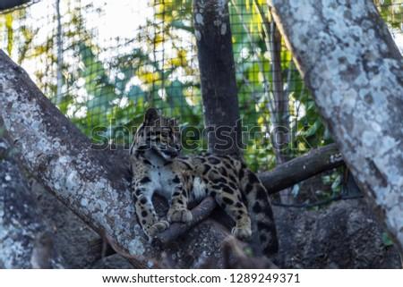 Leopard in a tree #1289249371