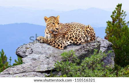 leopard on rock against wildness area