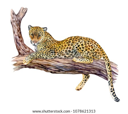 Leopard sitting on a tree. Big cat resting on a branch isolated on white background. Realistic watercolor. Illustrated. Template. Clip art.
