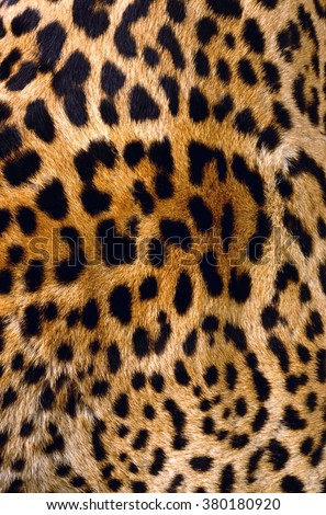leopard Skin #380180920