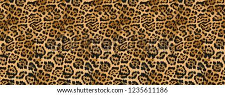 Leopard skin, leopard metric texture, animal skin