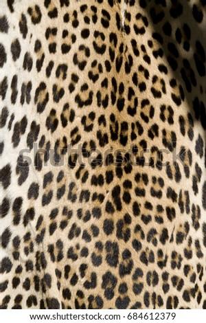 Leopard skin, speckled skin, colorful animal camouflage #684612379