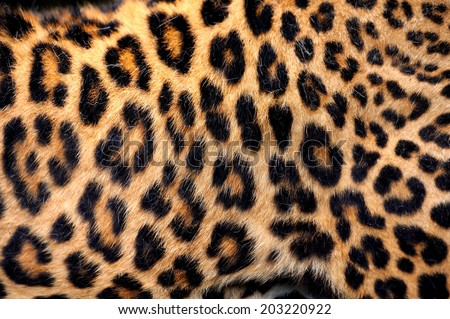 Leopard skin texture for background #203220922