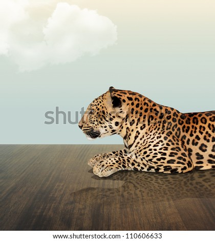 Leopard under the sky with cloud on wood floor