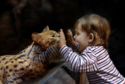 Leptailurus serval and little girl in the zoo