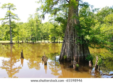 Leroy Percy State Park swamp and cypress knees