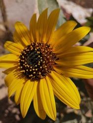 les plus belles photos de fleurs et de nature , des variétés des simples roses et fleurs et des rares plantes,
