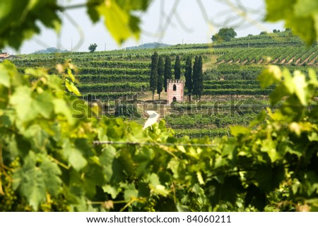 Lessinia (Verona, Veneto, italy), vineyards near Soave at summer with little church on the hill