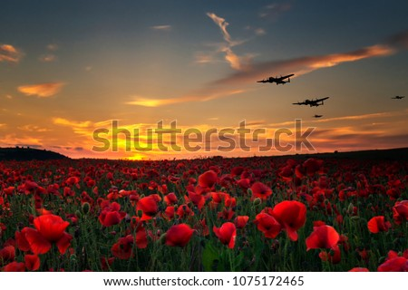 Lest we Forget poppy field with with WW11 planes flying across as the sun goes down.Remembrance Day, Anzac Day tribute to the fallen.