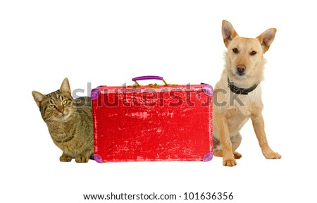 Let�´s Travel! Dog and cat with a suitcase.
