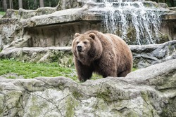 Lets go wild for wildlife. Undomesticated animal species or wildlife. Wild brown bear in natural environment. Raising awareness of the worlds wild fauna on world wildlife day. Wildlife matters.