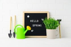 Letter Board with quote HELLO SPRING and garden tools, watering can, mug with pea microgreens on background white brick wall. Springtime home gardening concept. Spring Greeting card.