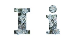 Letter I latin alphabet uppercase and lowercase isolated on white. Letter gray silver patterned plant succulent isolate