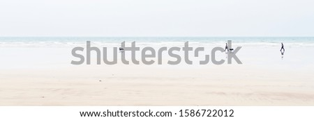 Letterbox Format Shot Of Beach With Couple Walking Dogs