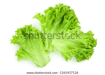 Lettuce leaf isolated on white background close up #1265437126