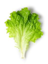 Lettuce leaves isolated on white background. Top view