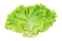 Lettuce. Salad leaf isolated on white background with clipping path