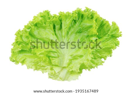 Lettuce. Salad leaf isolated on white background with clipping path Сток-фото ©
