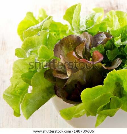 Lettuce salad mix . Selective focus