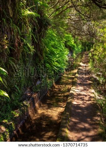 Levada with lush greenery #1370714735