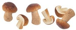 Levitating porcini mushrooms isolated on white background. Boletus mushrooms on a white background.