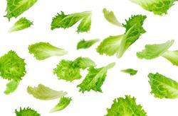Levitation of green lettuce leaves
