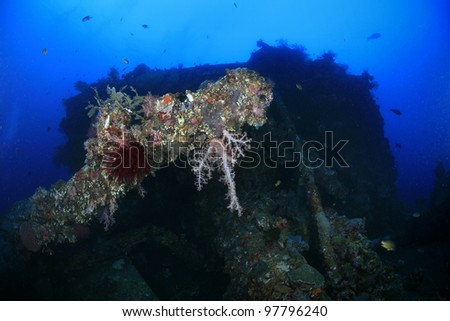 Liberty shipwreck in the waters of bali