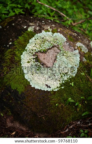 Lichen forming natural heart shape on rack on cloud forest