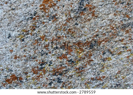 Lichen on Granite Rock Background