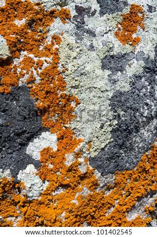 Lichen texture closeup background pattern