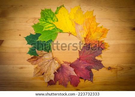 Life circle of a leaf, autumn colors, nature