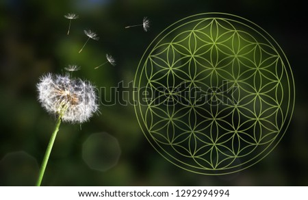 life flower life flower of life ornament nature dandelion energy