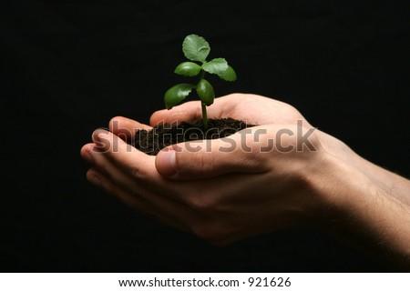 Life in hands 6