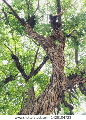 Life of a tree structure