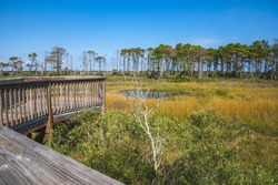 Life of the Forest Nature Trail at Assateague National Seashore in Maryland on the Delmarva Peninsula in early autumn