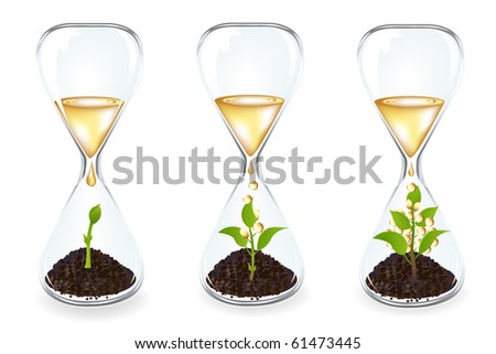 Life process of Money tree inside Glass clock, Isolated On White