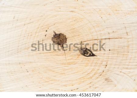 life ring tree #453617047