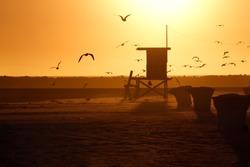 Lifeguard Tower and Sea Gull in Sunset, Corona Del Mar Beach, California.
