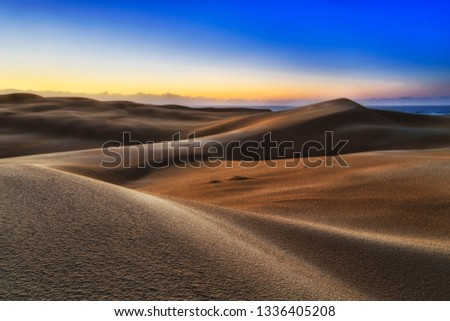 Lifeless endless sand dunes desert on shores of Pacific ocean - Stockton beach. early sunrise morning light in cold blue sky shining on untouched surface of the land. #1336405208