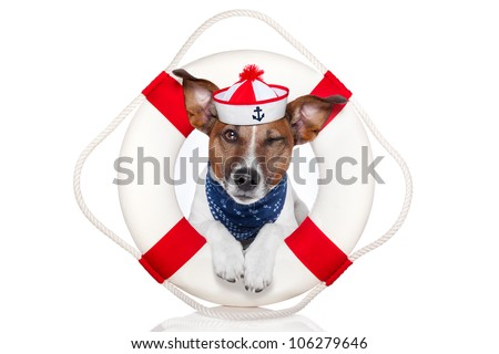 lifesaver dog squinting an eye