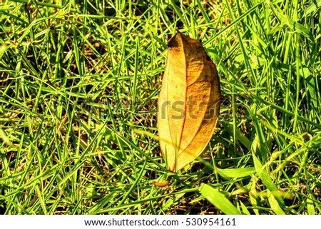 lifetime, life, leaf on the grasses, green and yellow, live or dearh #530954161